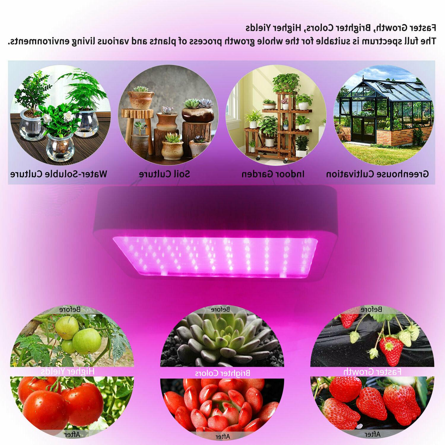 1000W Growing Lamp for